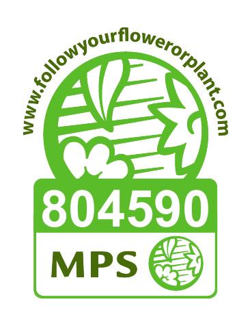 Viehweg MPS